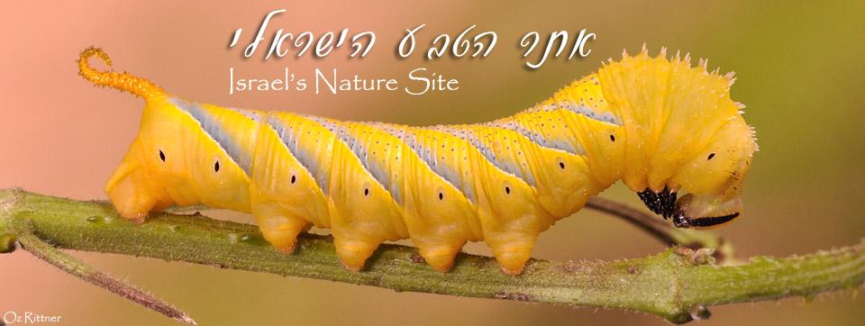 אתר הטבע הישראלי   Israel's Nature Site