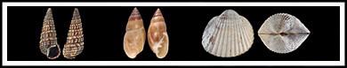 B mollusks-banner