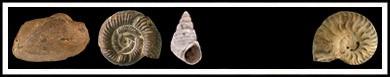 Fossils Link