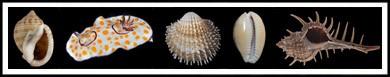 M mollusks-banner