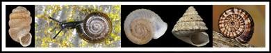 T mollusks-banner